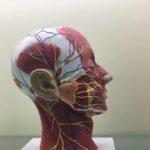 Máy quét 3d giúp các bác sĩ và nhà nghiên cứu thu thập mẫu vật sống