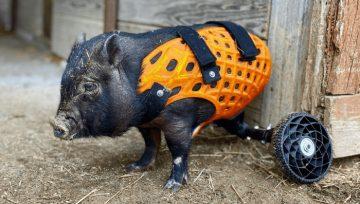 In 3D chân giả để cải thiện cuộc sống của động vật